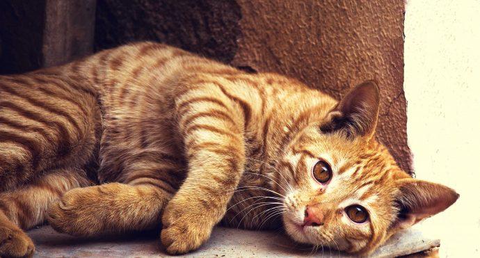Aprende cómo proteger a tu gato de las quemaduras solares este verano
