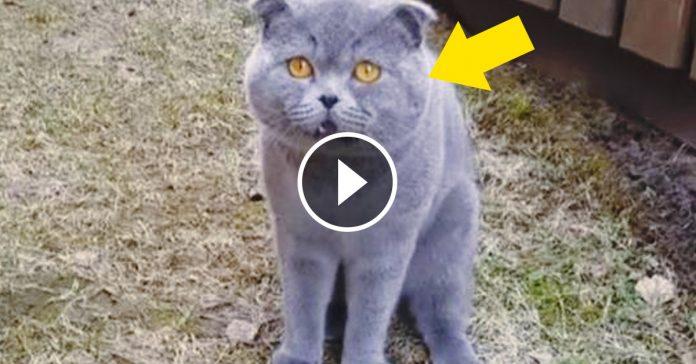 encontro a su gato y le pregunto que estaba haciendo video banner