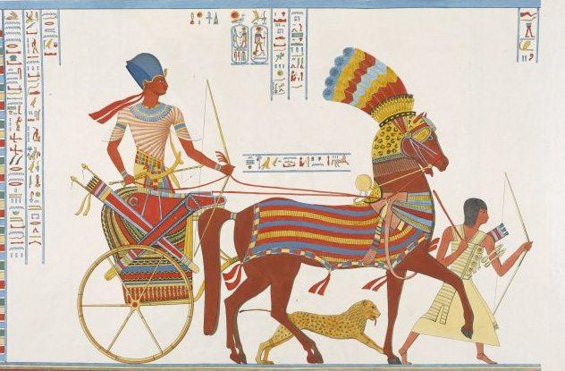 10 Hechos curiosos sobre los animales del antiguo Egipto que no se cuentan en los libros