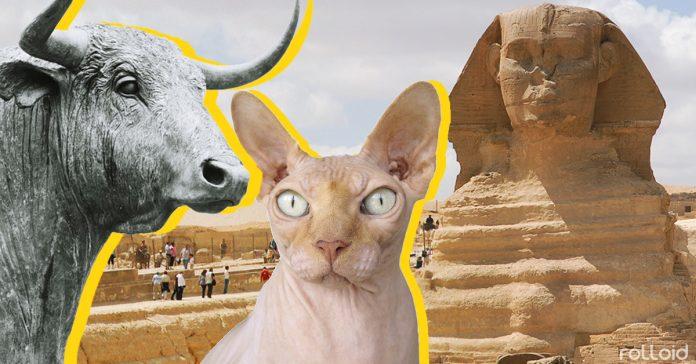 10 hechos sobre animales del antiguo egipto que te dejaran boquiabierto banner1