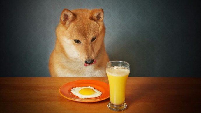 11 Alimentos muy saludables que le deberías dar de comer a tu perro