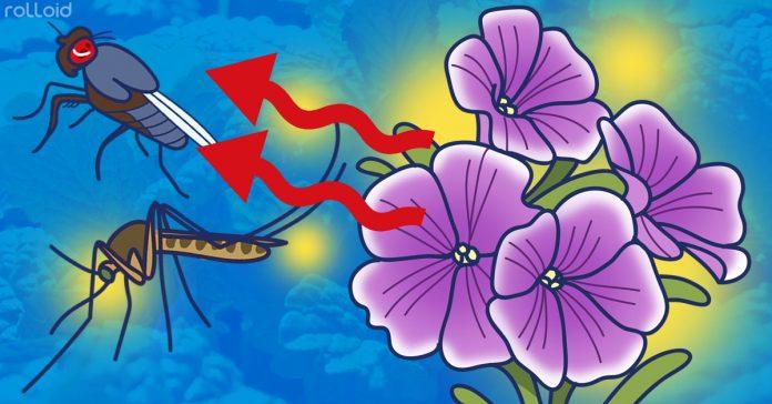 12 plantas para tener en casa que repelen los mosquitos banner