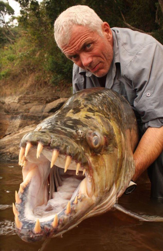 15 animales realmente extranos pescados en rios 147717