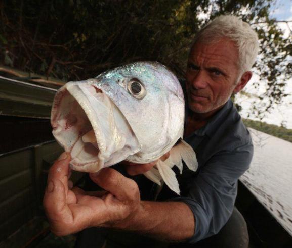 15 animales realmente extranos pescados en rios 147721