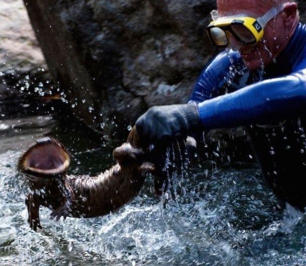 15 animales realmente extranos pescados en rios 147775