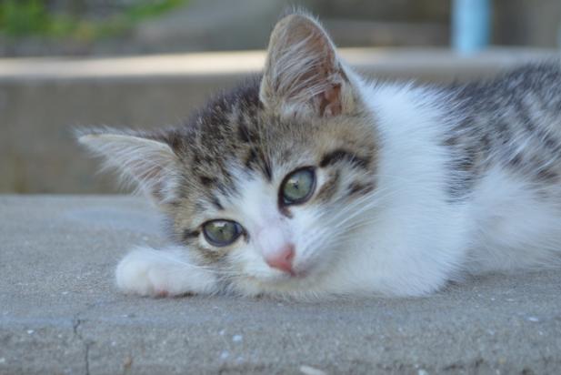 15 Cosas curiosas que casi nadie se ha preguntado sobre los gatos