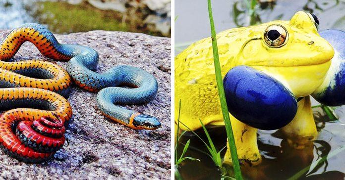 20 animales extremadamente coloridos banner