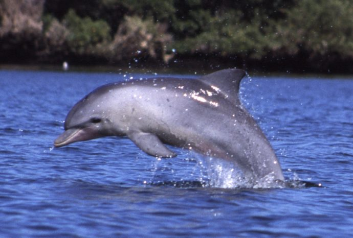 4 Terribles verdades sobre los delfines que Disney y otras empresas no quieren que sepas