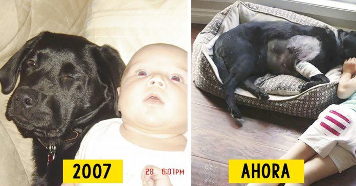 bebe cachorro perro como crecen banner