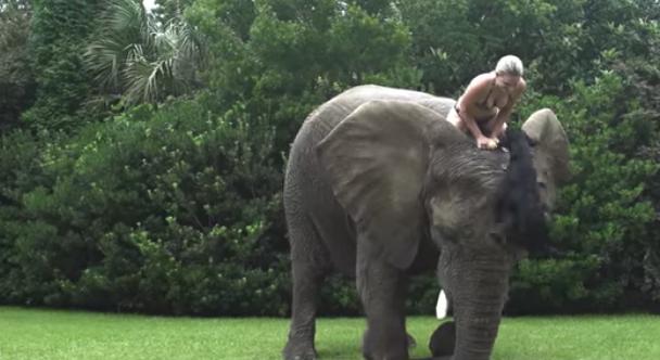 Salta a la red el divertido vídeo de Bella, la elefanta que se cree un perro