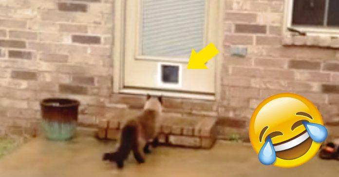 construye puerta para su gato banner