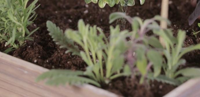 crea tu propio bosque en miniatura para decorar tu casa 154744