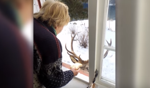 Un ciervo lleva visitando todos los días a una viuda para consolarla aunque creemos que es un poco convenido