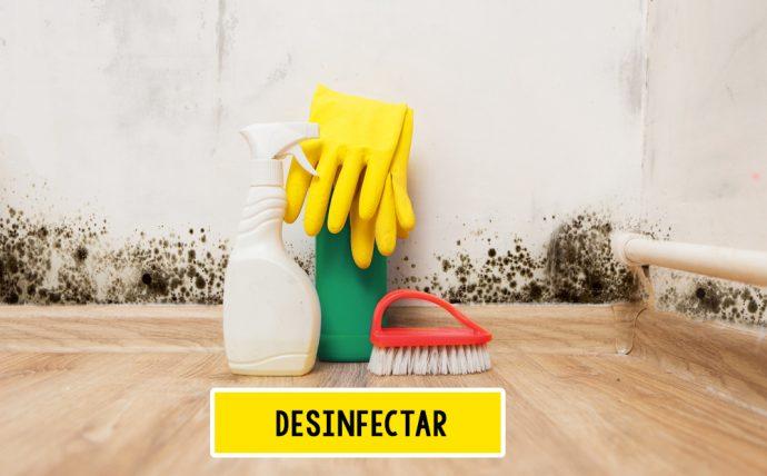 desinfectar moho