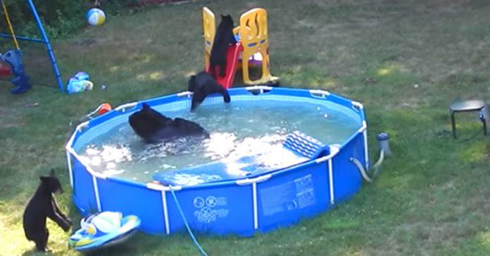 familia osos jardin piscina banner