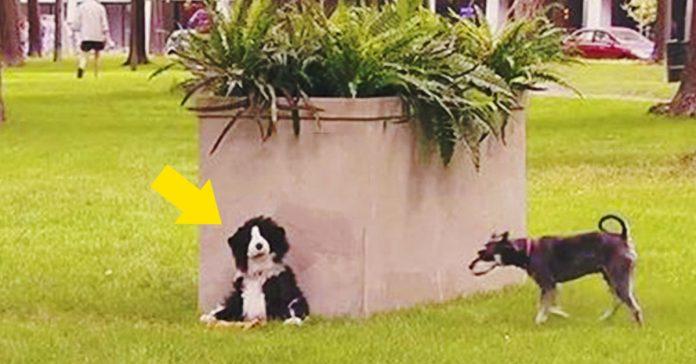 gastando bromas a perros banner