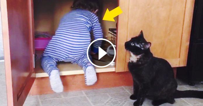 gato le gasta broma a bebe de la familia banner