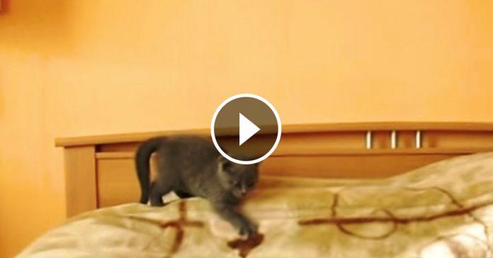 gato se pelea contra dos rivales manzanas banner