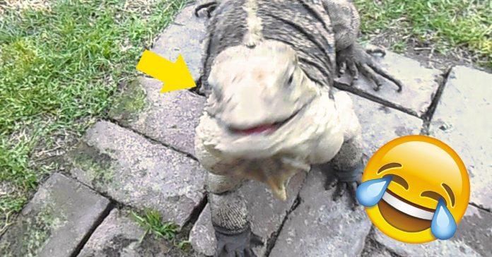 iguana gigante que se cree perro banner
