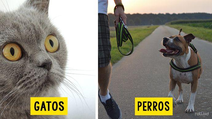 10 Divertidas fotografías que prueban lo distintos que son los perros de los gatos haciéndoles las mismas preguntas