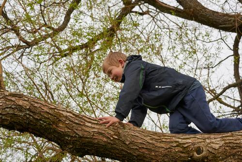 Cómo y por qué deberíamos subirnos a un árbol una vez en la vida aunque tengamos 50 años