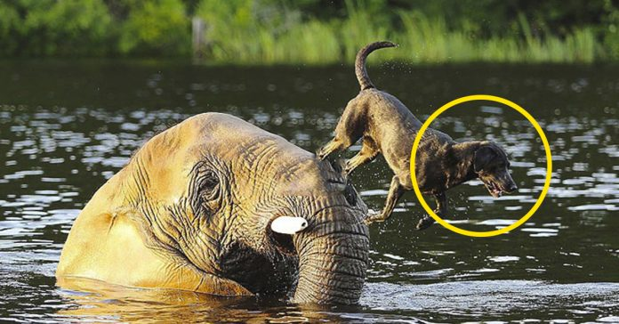perro y elefante mejores amigos banner