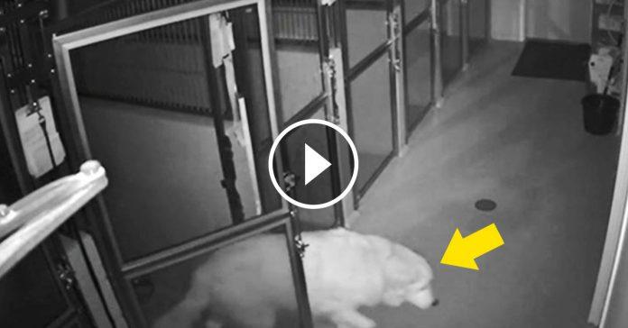refugio pierde un perro de 10 anos banner