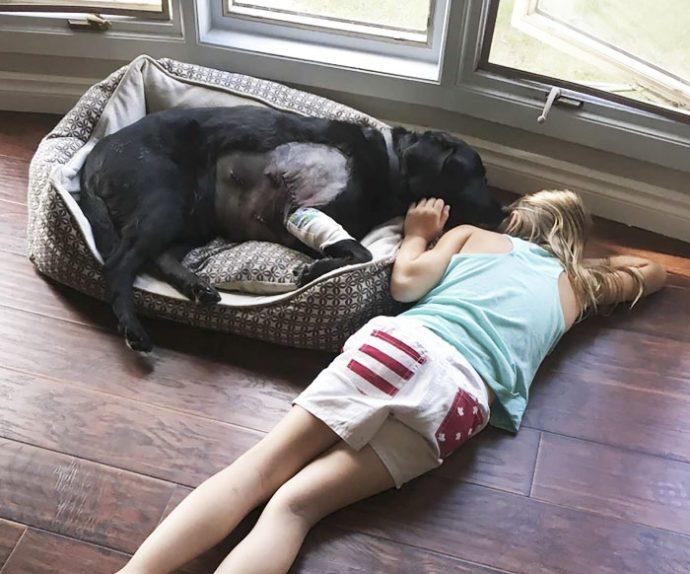 8 Imágenes que muestran las consecuencias de adoptar un perro para tu bebé