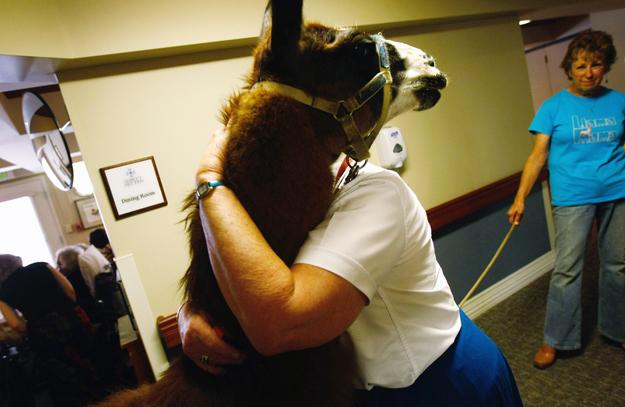 10 Animales que se convirtieron en héroes al salvar la vida a personas cuando no quedaba esperanza