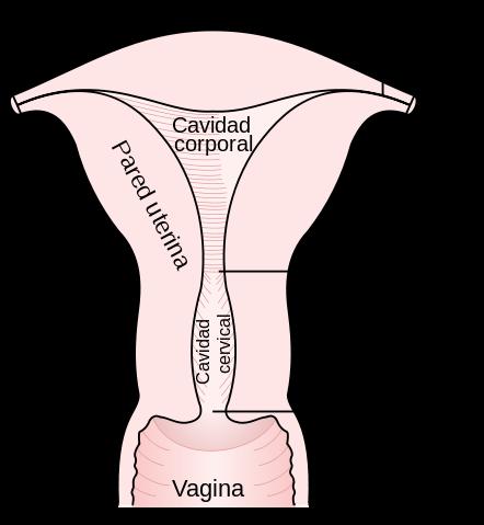 6 Cosas que explican cómo puede afectar el sexo al tamaño de tu vagina