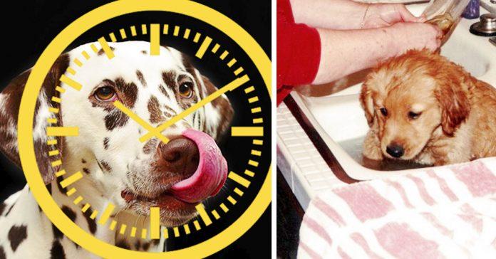 cosas que debes saber antes tener perro banner