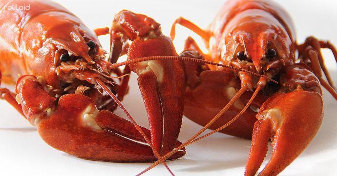 estos alimentos pueden conseguir que tu piel parezca mas joven 161663