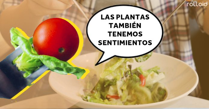 la ciencia demuestra que las plantas sienten cuando nos las comemos banner