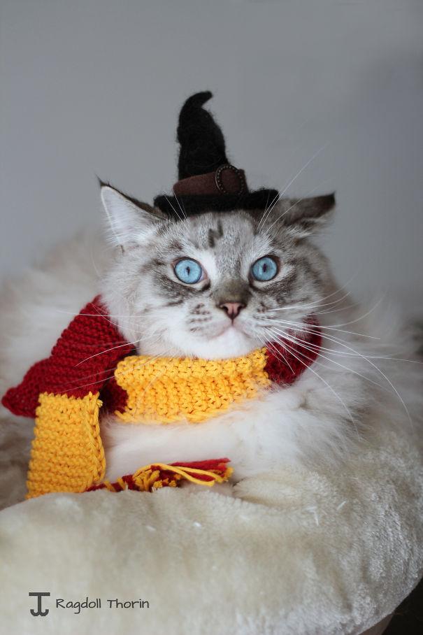 Los 20 Disfraces de gatitos realmente terroríficos para Halloween