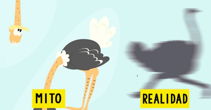 mitos animales que seguimos creyendo banner