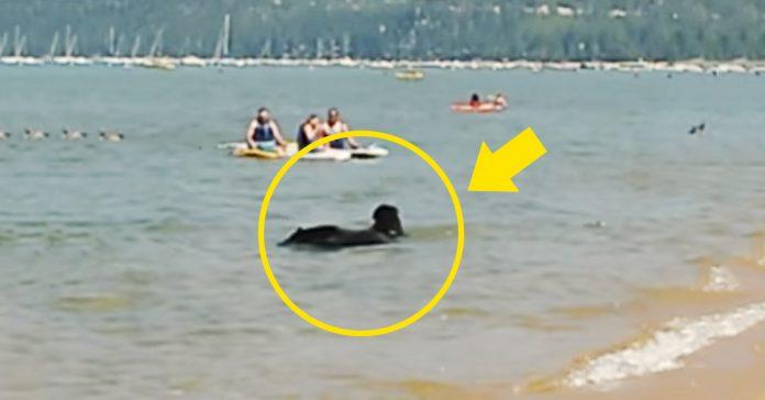 osos playa lago tahoe video banner