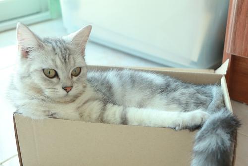 por que a los gatos les gusta tanto jugar con cajas 162172