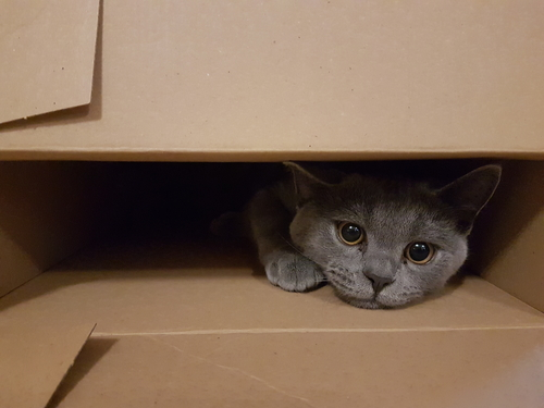 por que a los gatos les gusta tanto jugar con cajas 162173