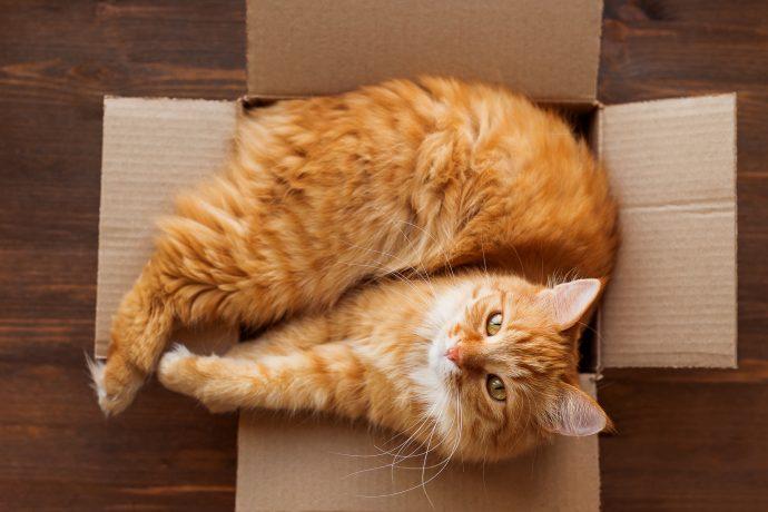 por que a los gatos les gusta tanto jugar con cajas 162181