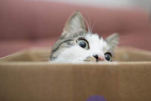 por que a los gatos les gusta tanto jugar con cajas 162183