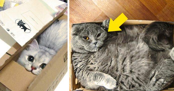 por que a los gatos les gustan las cajas de carton banner