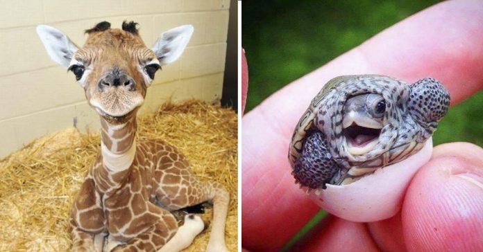 15 fotografias de crias de animales que demuestran que son demasiado adorables ara este mundo banner