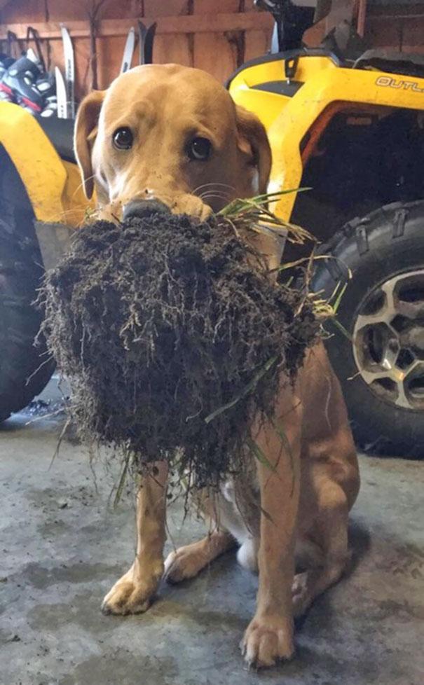15 Divertidos Perros que fueron pillados in fraganti y no supieron dónde meterse