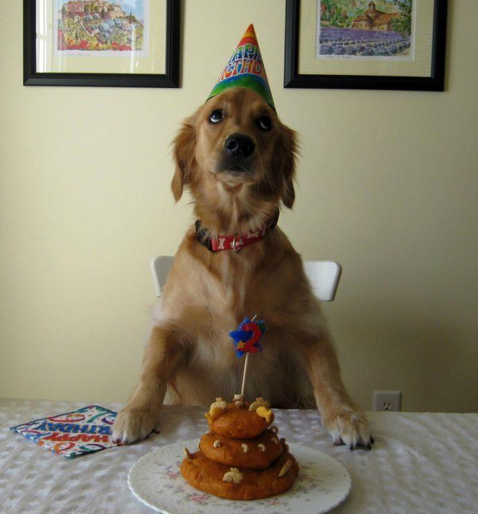 15 perros y su reacciones cuando recibieron la tarta de cumpleanos 1504688265