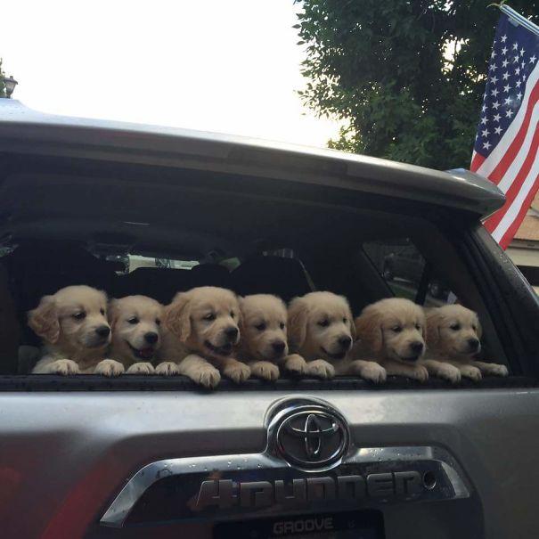 20 fotos que demuestran que los Golden son los perritos más puros del mundo