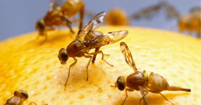 4 trucos para mantener alejadas a las moscas de tu fruta banner