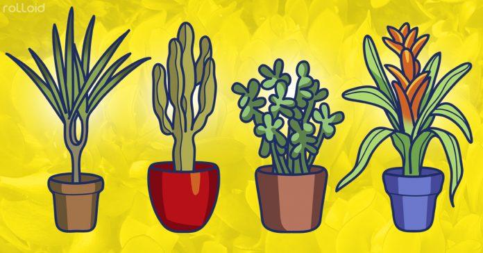 5 poderosas plantas para mantener aire limpio banner