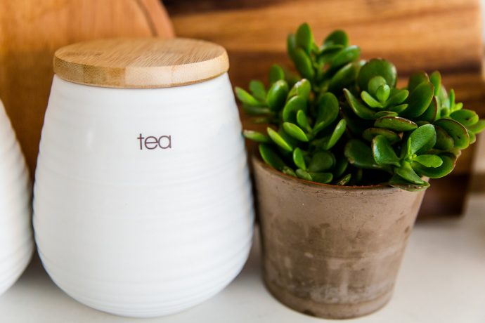 5 poderosas plantas para mantener limpio el aire de tu casa 01