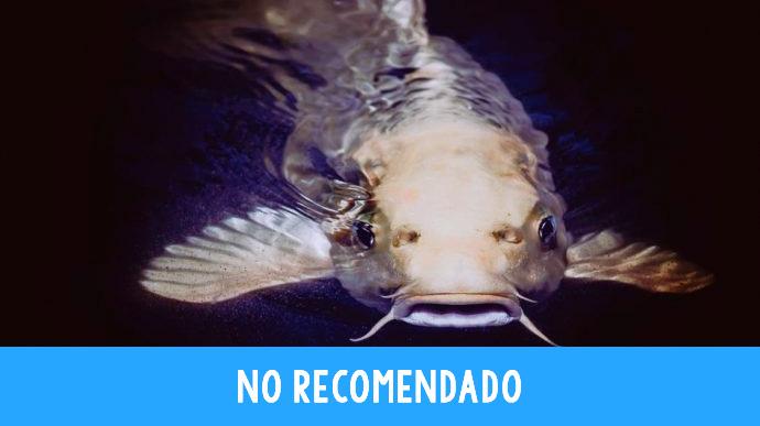 8 Pescados que hay que dejar de tomar y sus consecuencias