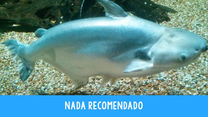 8 tipos de pescado que no deberias comer 06